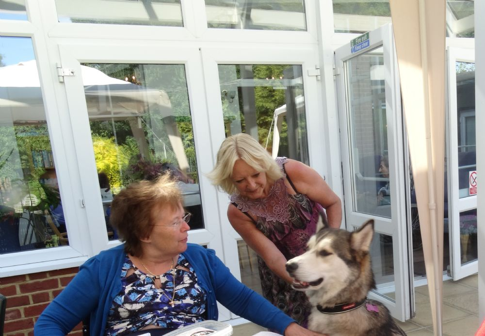A visit from 'Jackson' the 'Siberian Malamute'